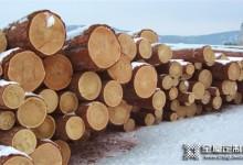 俄罗斯禁止原木出口消息暂未对中国市场产生实质性冲击